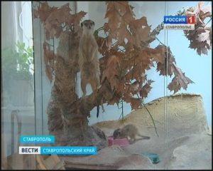 Сурикаты в Ставрополе