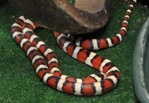 У меня проблема со змеей, что делать