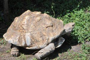 Советы по содержанию животных от Ставропольского Зооэкзотариума