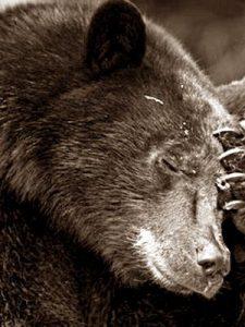 Канадец вежливым словом прогнал медведей со своего двора