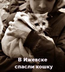 В Ижевске спасли кошку