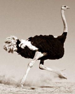 Африканский страус погнался за велосипедистами