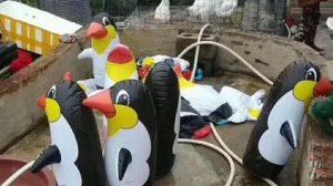 Редкие пингвины Китая!