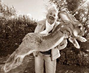 Самые большие кролики на ферме