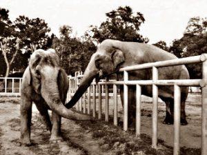 Защитники животных хотят освободить слонов из зоопарка