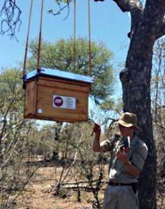 Конфликт между слонами и садоводами,помогают решить пчелы