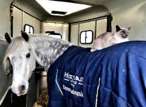 Кот Луи любитель лошадей, научился ездить верхом