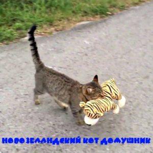 Новозеландский кот домушник