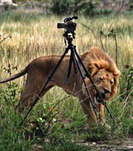 Львенка забрали полицейские у фотографа