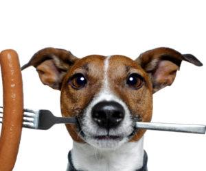 Собачий корм своими руками