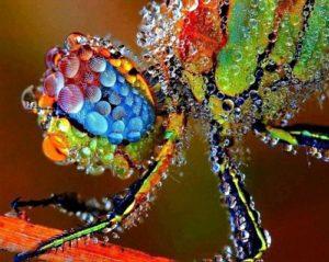 просто стрекоза покрытая росой