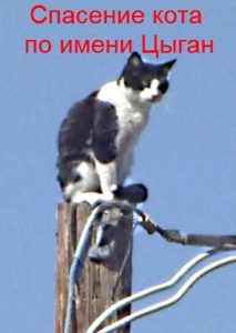 Спасение кота по имени Цыган