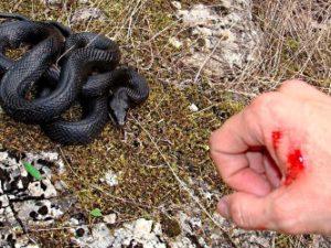 Какие змеи первыми нападают на человека