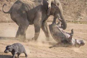Не надо нападать на слонов, чревато..