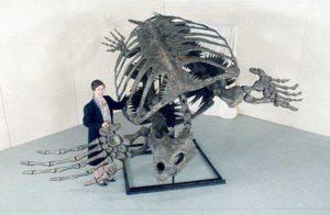 Размеры ископаемой черепахи Archelon ischyros