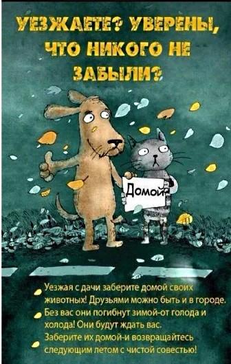 Призываем дачников не оставлять животных 1