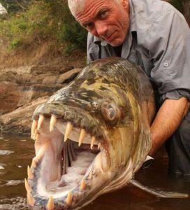 тигровая рыба