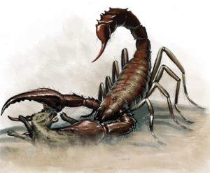 пульмоноскорпион