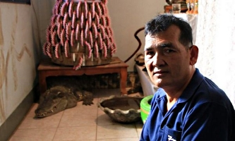 Огромный крокодил живет в доме